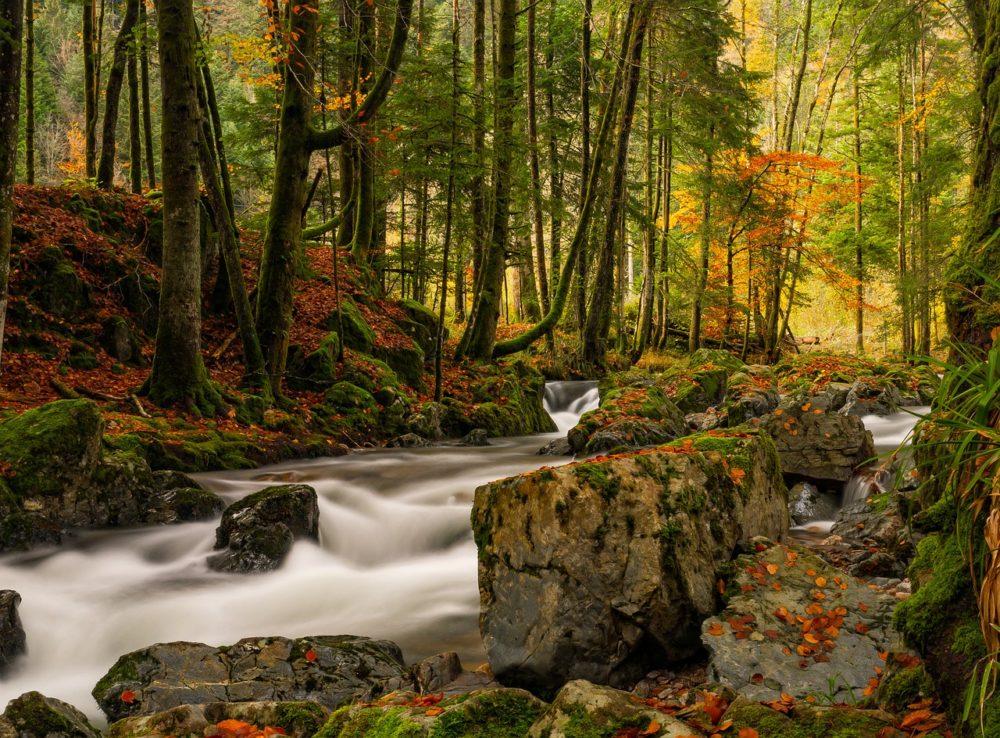 Image parc naturel Ballon des Vosges