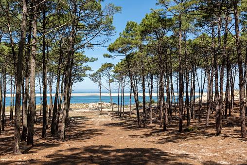 Forêt et mer des Landes