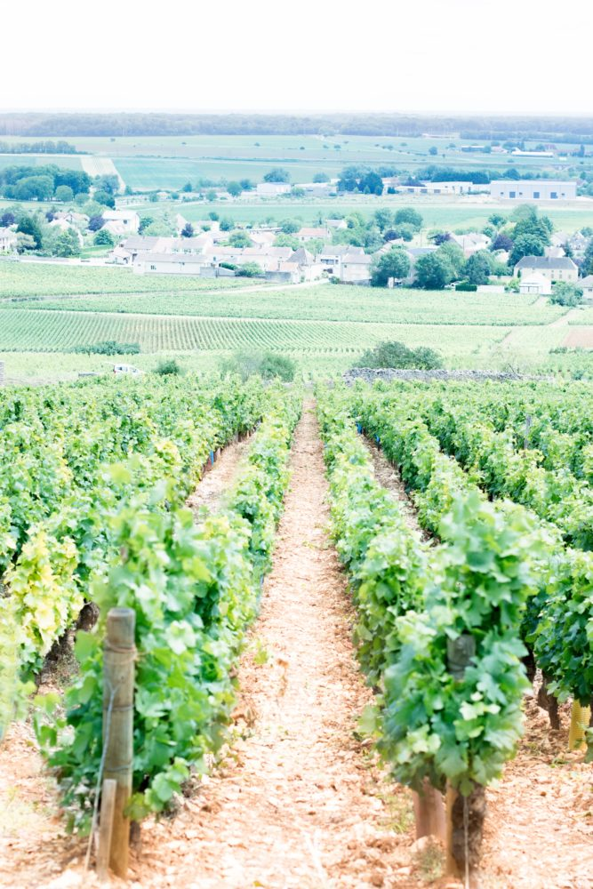 Photographie vignes Bourgogne